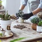 Πως μπορεί ένα φυτώριο ή γεωπονικό κατάστημα, κέντρο κήπου, να αξιοποιήσει το Internet